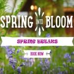 rsz_spring_breaks_widget