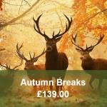 Autumn Breaks Widget3
